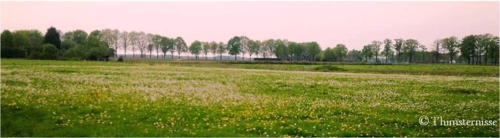Thimsternisse-landscape2