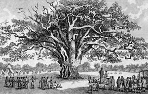 A Gathering under the Fairlop Oak, around 1790. Maker of this engraving not known by me. Note that the tree, which was taken down in 1820, already holds many dead branches.