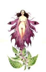 belladonna witch poison plant art